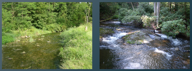 PictureFigure 1: On the left, this sunny stream is representative of a nutrient-rich green food web, while the shaded stream on the right is representative of a more nutrient-limited, brown food web.